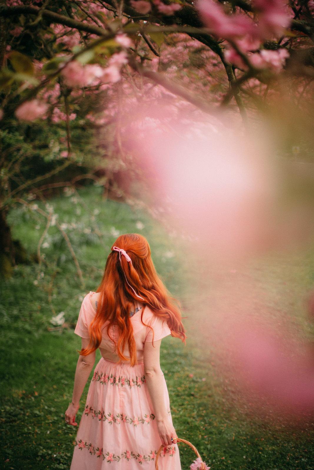cherry blossom-19