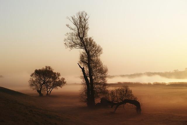 Nebel Sonnenlicht Morgen