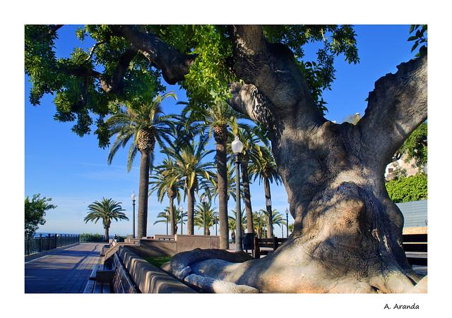 arbol y balcon del mediterráneo