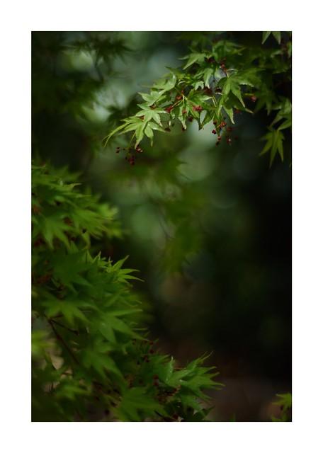 2019/4/3 - 10/12 photo by shin ikegami. - SONY ILCE‑7M2 / Carl Zeiss C Sonnar T* 1.5/50 ZM