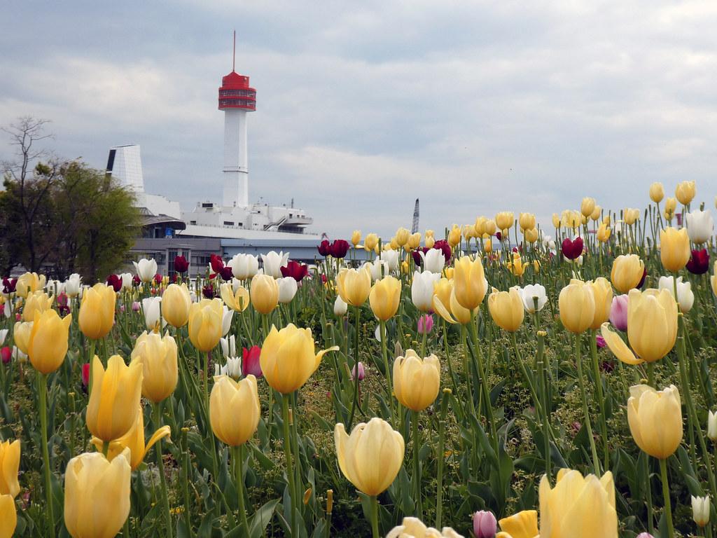 Тюльпаны и музей морской науки