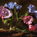 Pulmonaria - from pink to blue