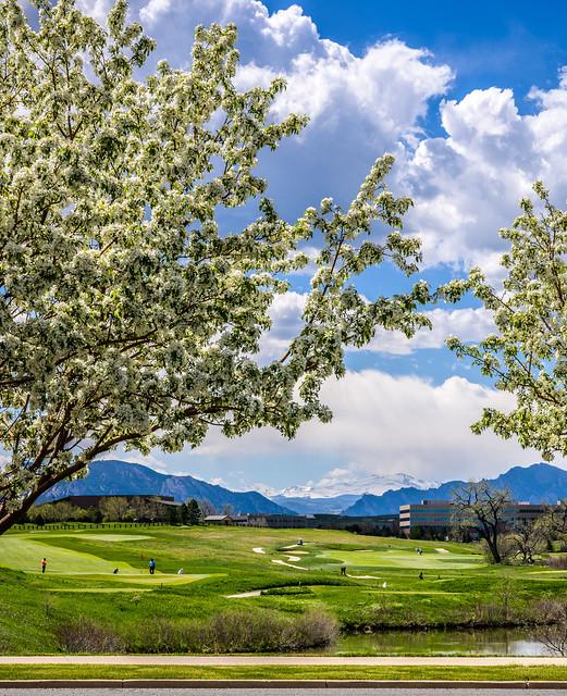 Blossom framed peaks