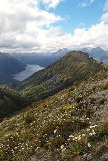 Daisies, summits and fjords