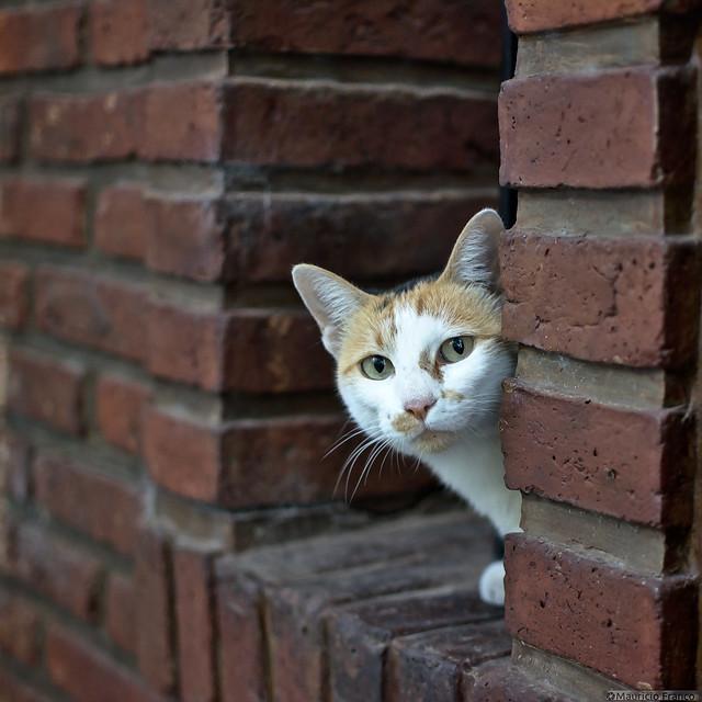 Me parece que vi un lindo gatito