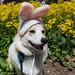 Easter Clark