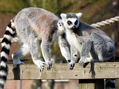 A day at Whipsnade Zoo