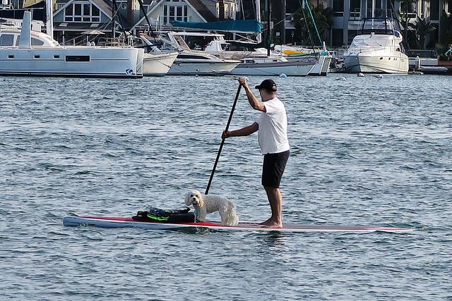 Paddleboard Dog