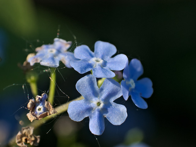 Soft blue and unidentified_1110412