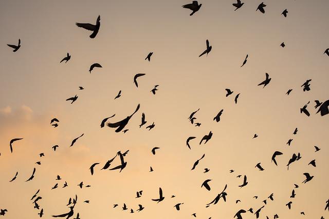 The Birds at Sunrise, Chennai