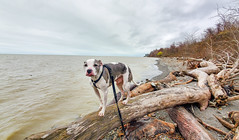 Juneau in Lake Erie Bluffs
