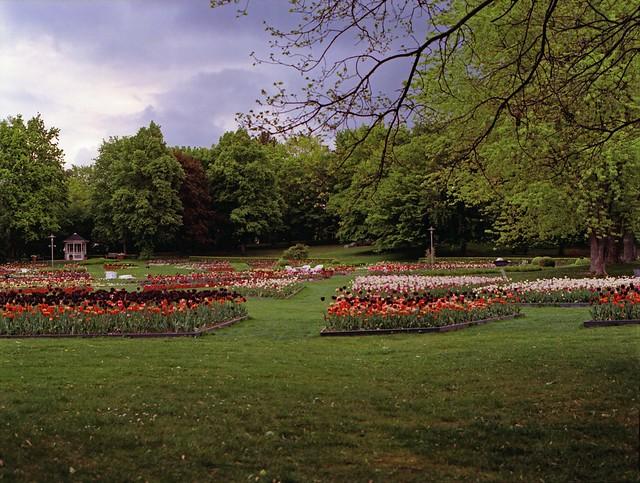 Tulipan Berlin Britzer Garten 9.5.2019