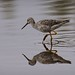 the loner - Greater Yellowlegs by foto tuerco