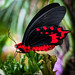 BUTTERFLY -IV-