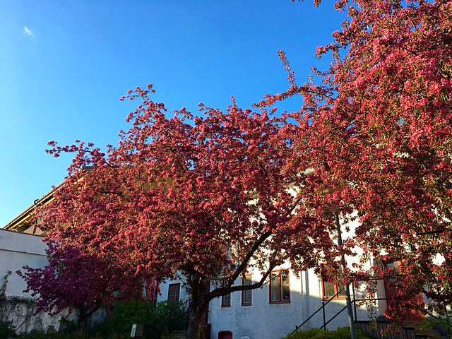 Flowering Paradise-Appletrees