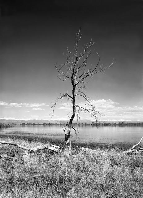 Lone Tree, Barr Lake State Park, Colorado