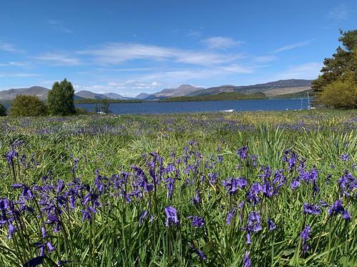 Bluebells at Loch Lomond