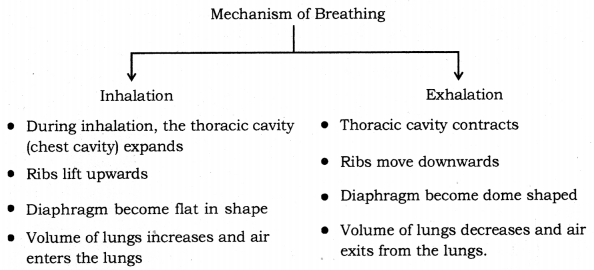 Life Processes Class 10 Notes Science Chapter 6 17