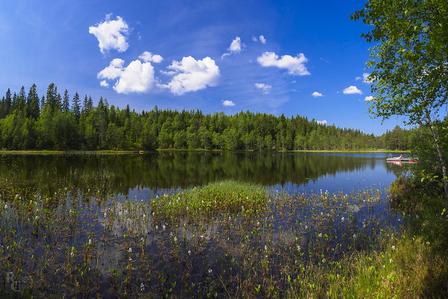 A Spring Day in the Nordmarka