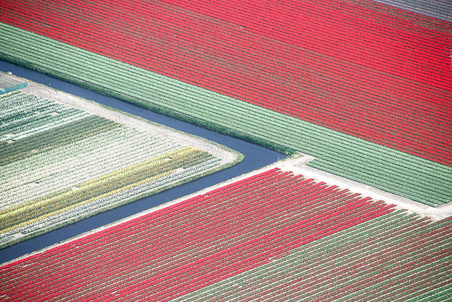 Aerial of the flower fields, the Netherlands