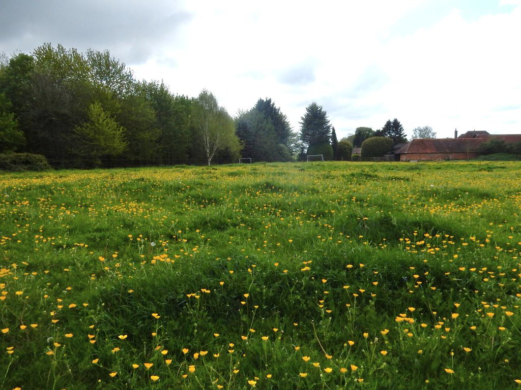 Buttercups Goring Circular via Hill Bottom