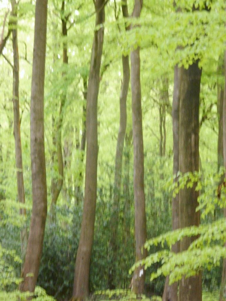 In the Beechwoods Goring Circular via Hill Bottom
