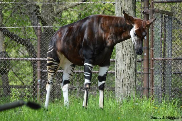 Brookfield Zoo  Chicago, Illinois.   DSC_7895[1]