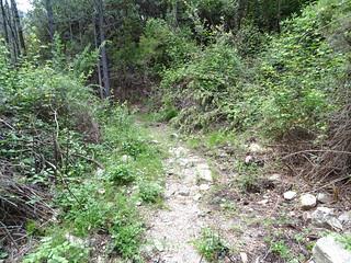 Retour sur le Chemin de Paliri : le roncier n'a pas repoussé