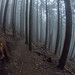 The Foggy Way by Mark Griffith