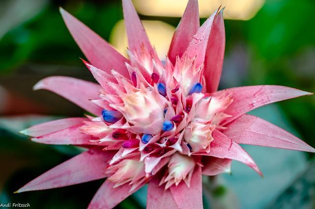 Eine Blüte von der Landesgartenschau in Frankenberg
