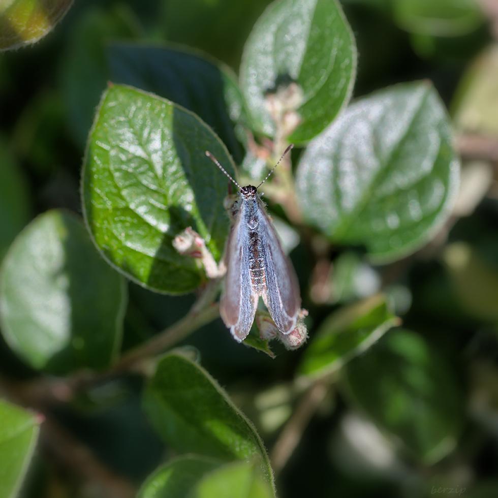 Macros/  proxi/  insectes  - Page 27 46952796405_81c2a4a0bc_o