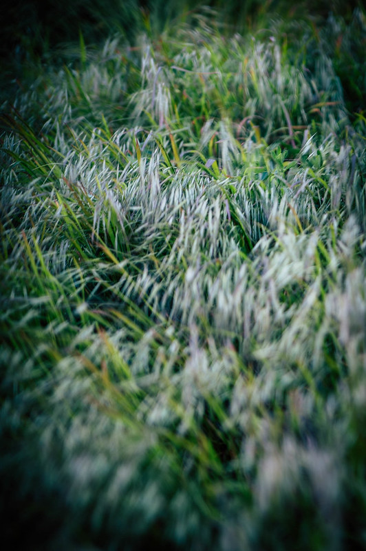 Grass_right