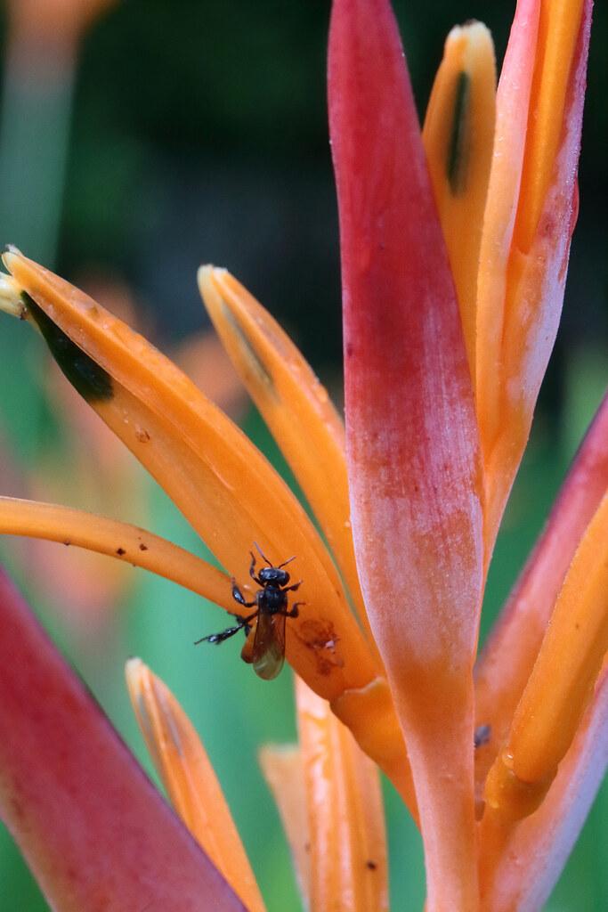 Palenque Flower Visitor