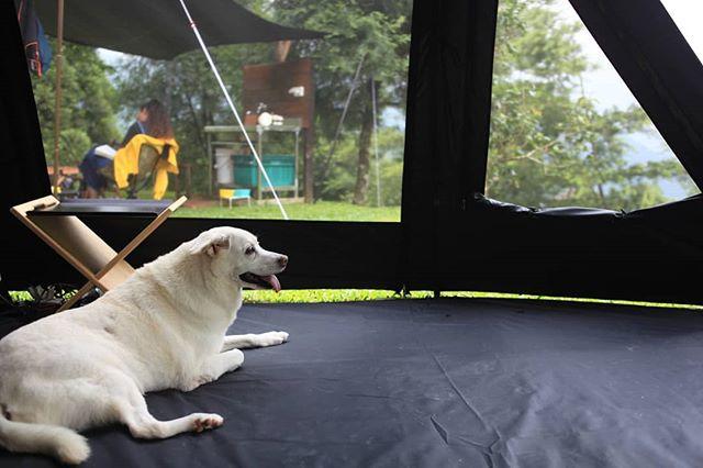 20190518 時晴 時雨 球喜歡在裡面 有安全感 #歐北露 #campinglife #ilovecamping #campingwithdogs #TiiTentSunrise #喜歡大窗 #試睡專員 #林球子 #十穗
