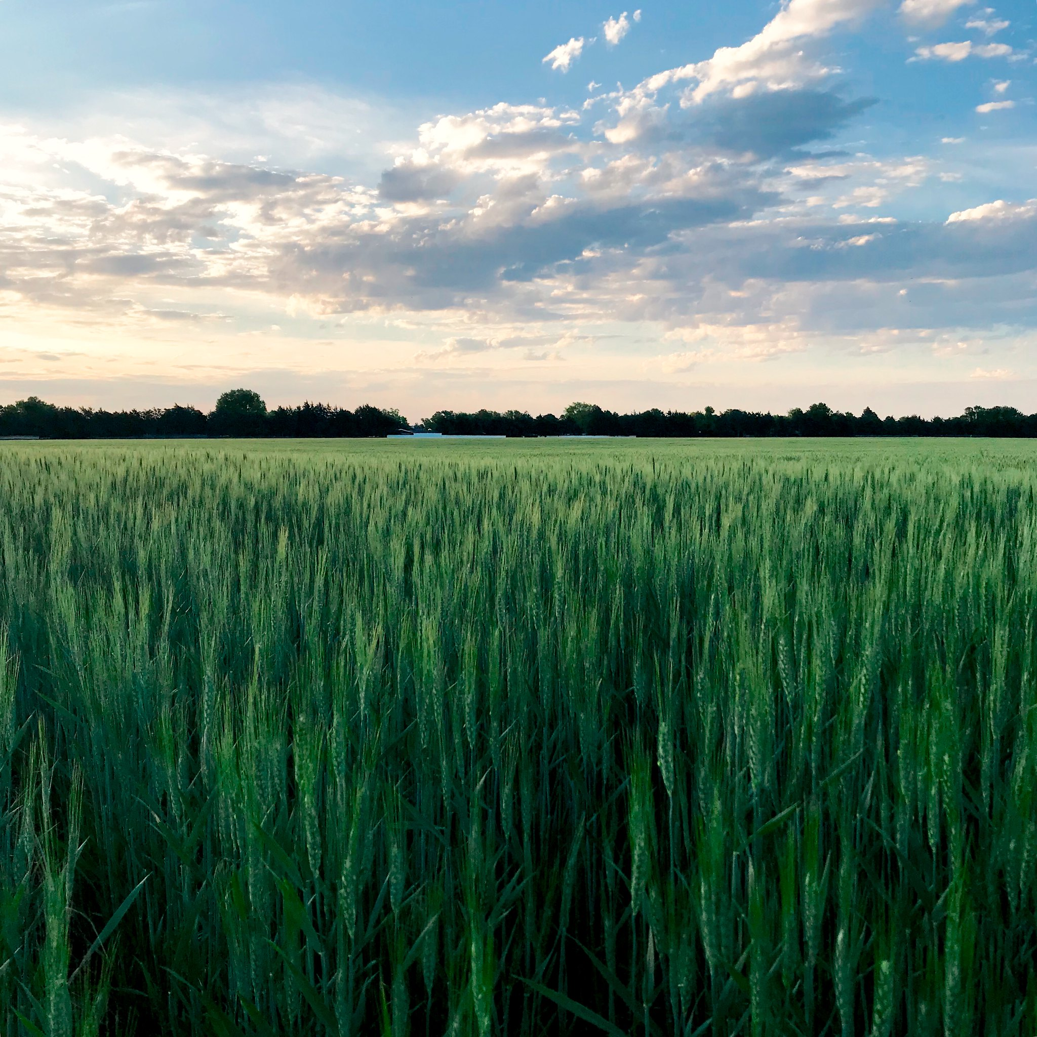 Photo Credit: Laura Haffner - High Plains Harvesting