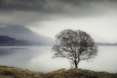 Loch Side