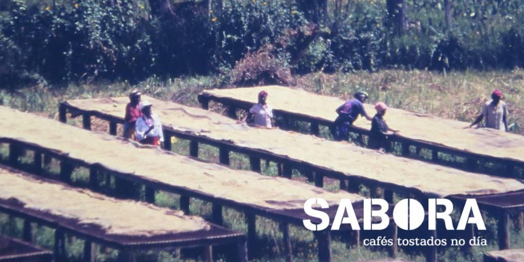 Tipo de café: procesado en seco ou natural en camas africanas
