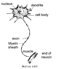 ncert solutions for class 10 science chapter 7