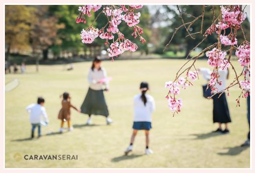 桜の咲く公園で遊ぶ親子