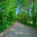 Tree lined gravel Nichols Road (TR 176) near an old Civil War road in Meigs County,  Southeast Ohio by diana_robinson
