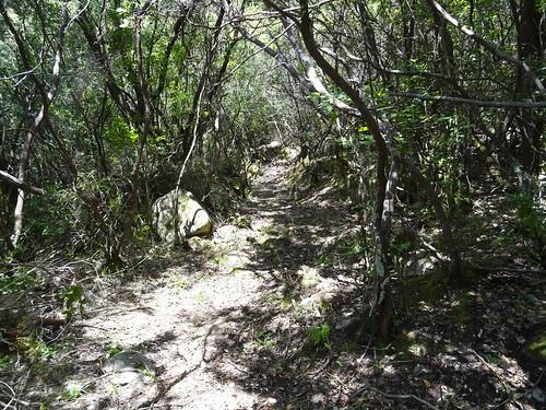 Le chemin de Luviu après le pin dégénéré en vue de la carbunara