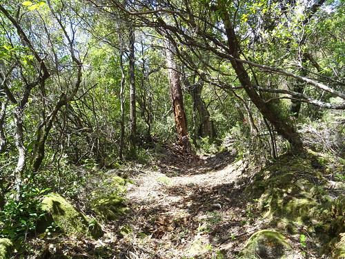 Le chemin de Luviu vers le pin dégénéré