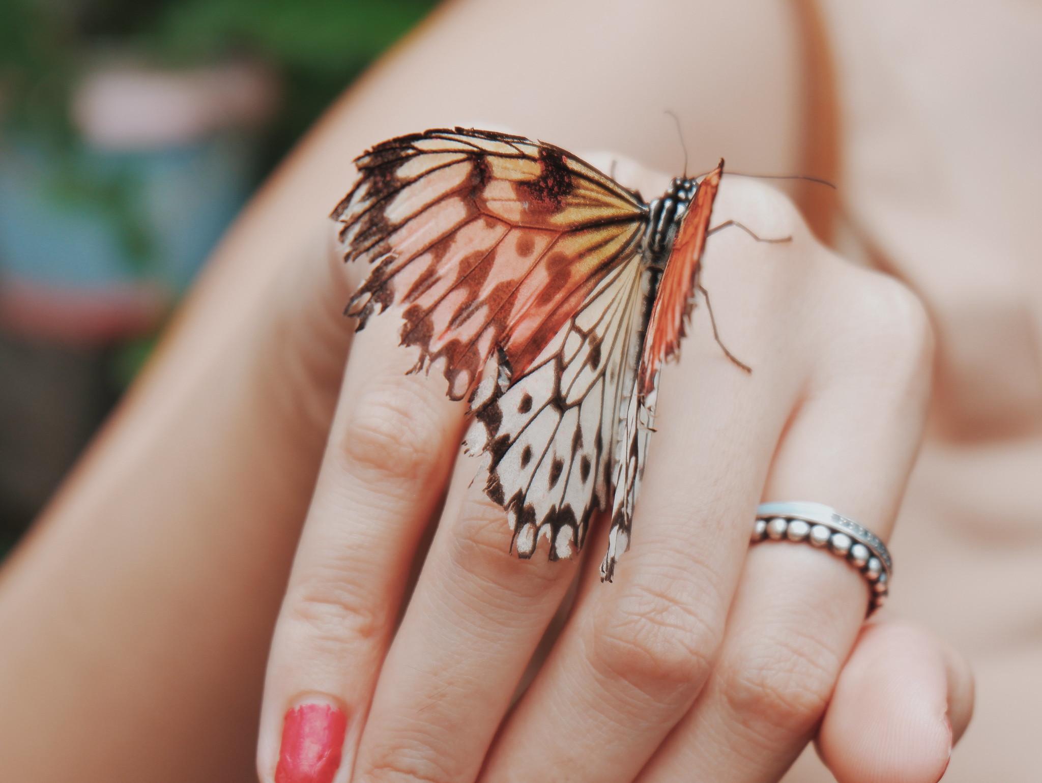 Butterfly Farm in Kawit Gasan