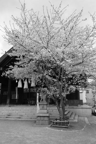 02-05-2019 Otaru (12)