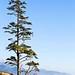 ECOLA STATE PARK AND CANNON BEACH OREGON COAST PACIFIC NORTHWEST LANDSCAPE VERTICAL