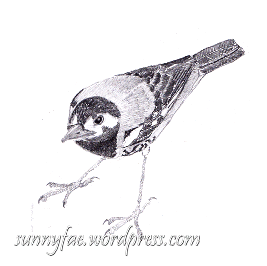 little brown bird in graphite pencil