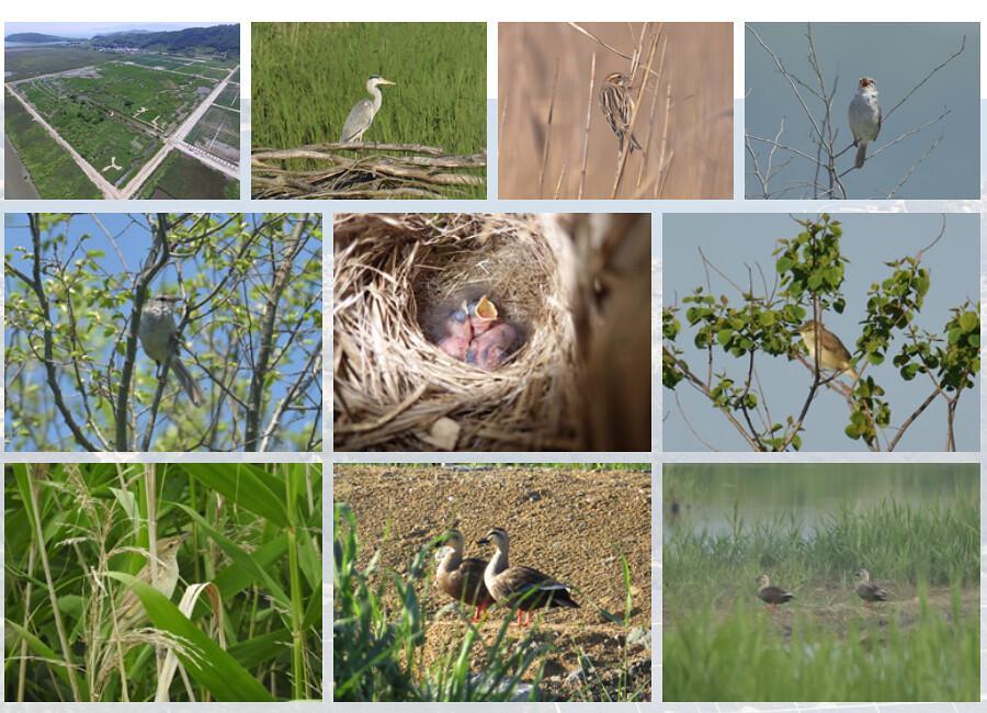 「瀨戶內kirei太陽光發電所」官網列出的當地鳥類現況。