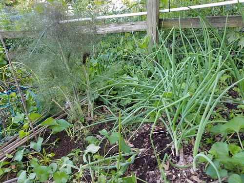 Spring Onions & Bronze Fennel