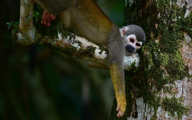 Monkeys 7