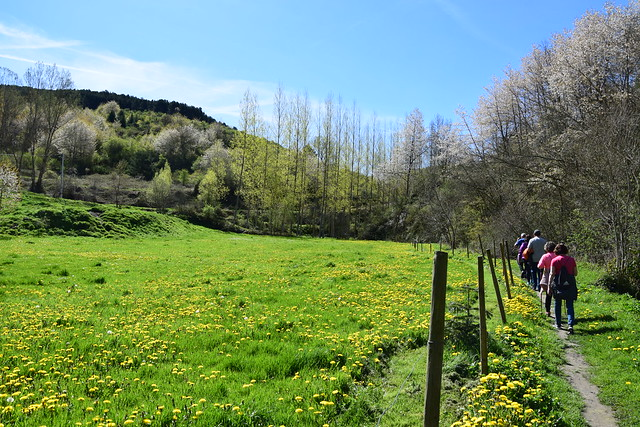 Senda de los Batanes (Pradoluengo, Castilla y Leon, España, 30-4-2019)